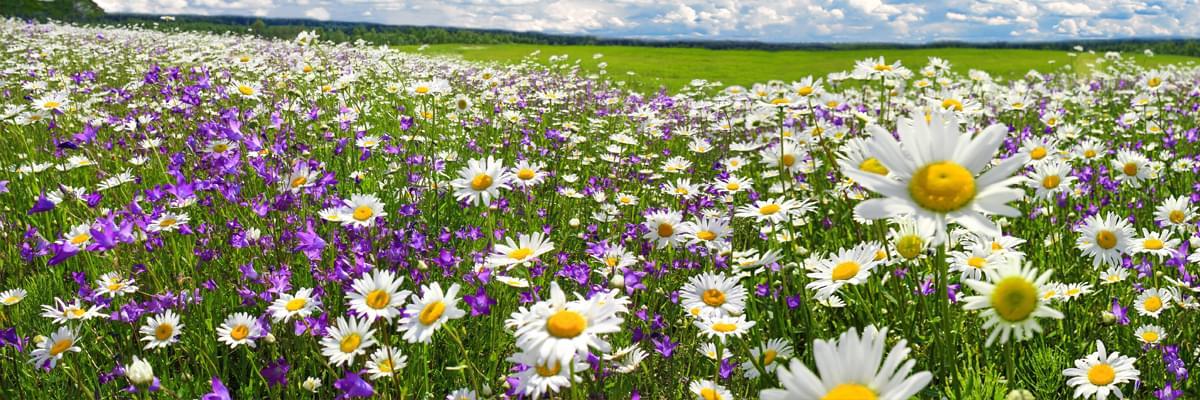 Hoida allergia ajoissa. Nauti keväästä ja kesästä.